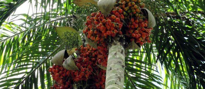 154. Noticias sobre empredimiento paletas hechas de coco y chontaduro
