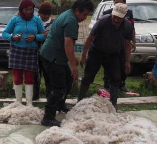 158-Noticias de emprendimientos sobre lana de alpaca-gastronomía ecuatoriana-ayuda en la maternidad-streaming-Glovo